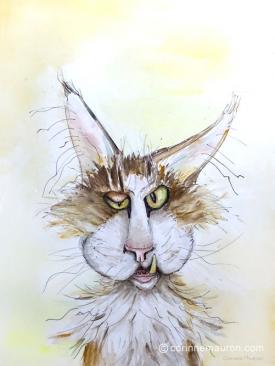 Chat clin d'oeil, souvenir d'un disparu