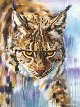 Lynx, hiver