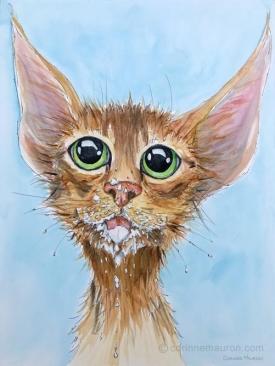 chat barbouillé de lait